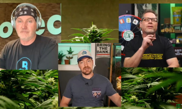 Dude Grows Show How You Can Keep Your Weed Danker For Longer With Drew From Boveda